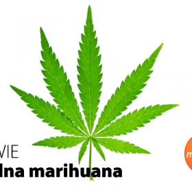 Prawie legalna Marihuana Minutka Blog